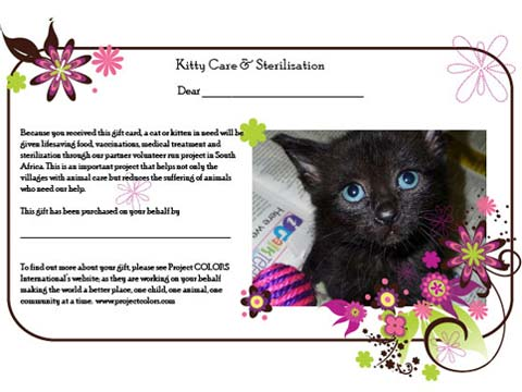 Kitty Care & Sterlizations